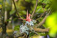 Origami paper crane made of original Japanese origami paper set up in a natural garden environment.