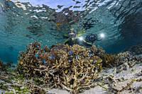 photographer on the house reef at Komodo Diving Resort, Sebayur Island, Flores Sea, Indonesia.