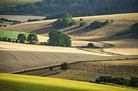 Summer afternoon in South Downs National Park, West Sussex, England.