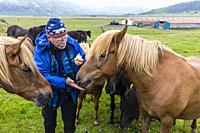 Feeding an Icelandic horse an apple on a farm on the southeast coast of Iceland.