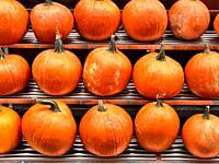Pumpkins Displayed at an Outdoor Manhattan, NYC Food Market