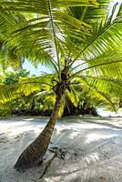 Anse Lazio beach, Praslin island, Seychelles, Africa.