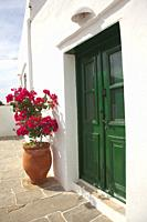 Pot with bougainvilleas in front of a whitewashed traditional Cyclades house in Ano Petali or Pano Petali village, Sifnos Island, Cyclades Islands, Gr...