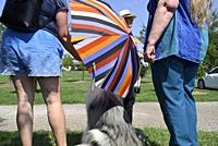 A woman in blue shorts holds a striped umbrella over a dog after the annual Pride March, Windsor, Canada.