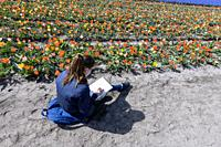 A Girl enjoying a field of flowers in Holland,.