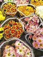 Wrapped chrysanthemums for sale.