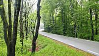 Road through beech forest (Fagus sylvatica). Springtime at Montseny Natural Park. Barcelona province, Catalonia, Spain.