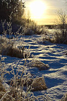 Frost crystals are covering trees and bushes, illuminated by the low winter sun on a cold day in northern Sweden.