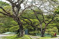 Trees around Fort Margherita, Kuching, Sarawak, Malaysia