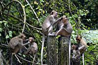 Wild monkey at Phnom Tamao Wildlife Rescue Center,Takeo Province,Cambodia,South east Asia.