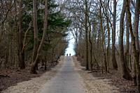 path through the dunes with trees in Holland.