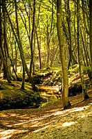 forest with river Orzechowa, Poland, Baltic sea.