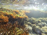 Underwater Las Rotas beach San Antonio Nature reserve in Denia Alicante Spain.