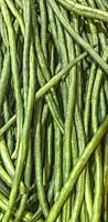 Green beans are the unripe, young fruit and protective pods of various cultivars of the common bean.