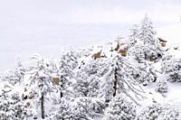 Snow dusted pines and rocks in the San Bernardino Mountains, San Bernardino National Forest, California USA.