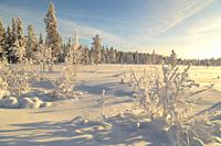 Landscape in winter season, nice warm afternoon light with clear blue sky, Gällivare county, Swedish Lapland, Sweden.