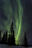 Northern light, Aurora borealis, colorful sky, Gällivare county, Swedish Lapland, Sweden.