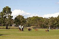 Late afternoon dog walking at Elsternwick Park in the SE suburbs of Melbourne, Australia