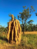 Mound-building termites in the Northern Territory of Australia.