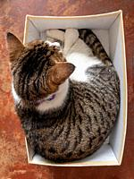 Overview of a cat in a shoe box.