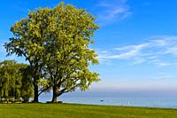 Park with tree at Lake Constance, Arbom , Switzerland.