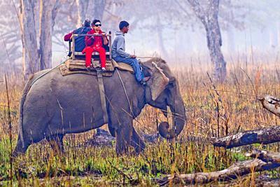 Elephant Safari, Domestic Elephant, Grasslands and Forest, Royal Bardia National Park, Bardiya National Park, Nepal, Asia.