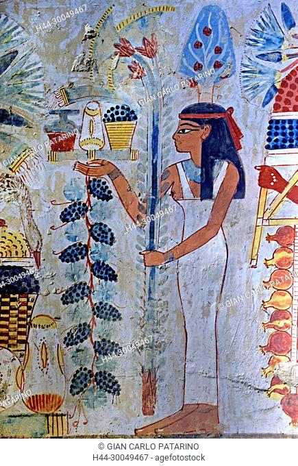 Luxor, Egypt, tomb of Menna or Menena (TT69) in the Nobles Tombs (Sheikh Abd El-Qurna necropolis): beautiful scenes of life with bunches of grapes