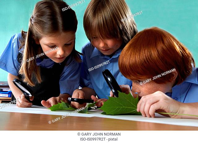 School children studying leaves with magnifying glasses in a classroom