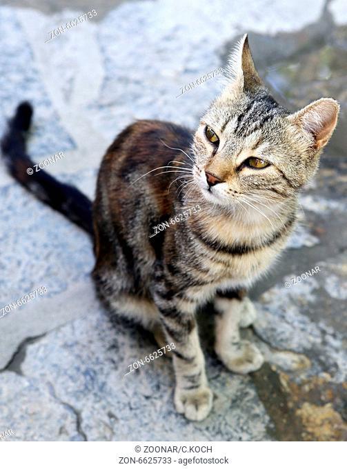 Portrait einer streunenden Katze in der Tuerkei 2014