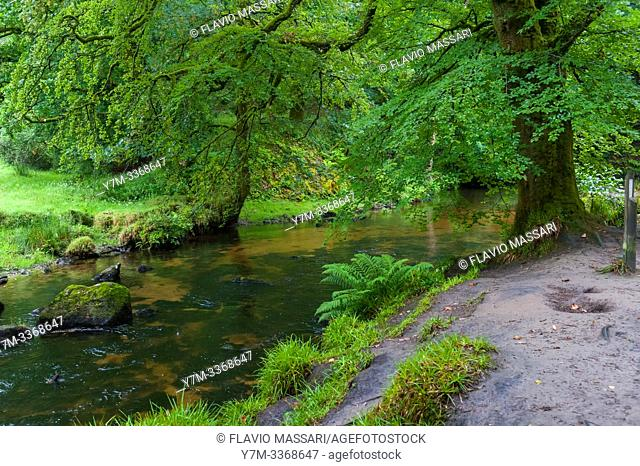 The Golitha Falls are a series of spectacular cascades and waterfalls along a section of the River Fowey as it makes its way through the ancient oak woodland of...