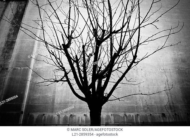 Tree without leaves, silhouette