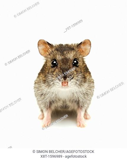 Hamster Cut Out