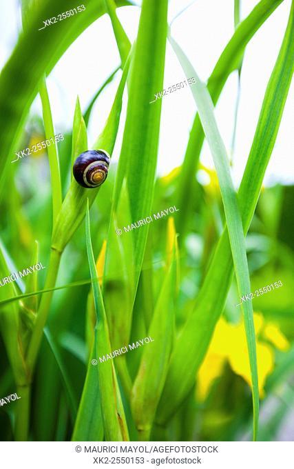 snail on green leaves