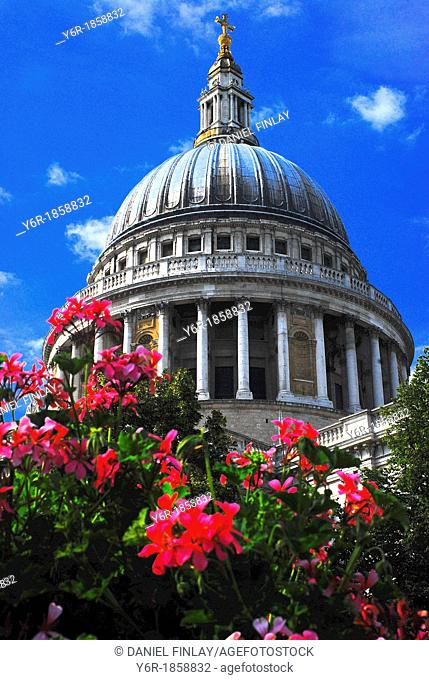 St  Paul's Cathedral seen through flowers in Festival Gardens on a very sunny Summmer day in London, UK