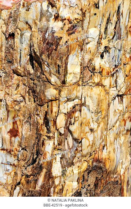 bark of a petrified tree