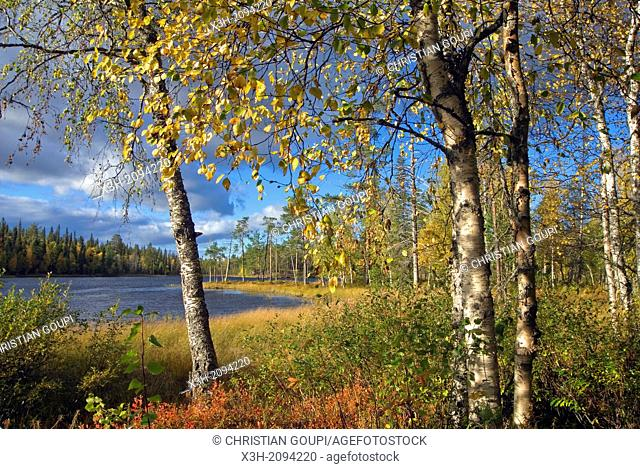 Pyha-Luosto National Park, Lapland, Finland, Northern Europe