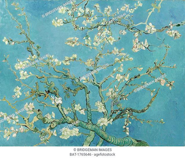 Gogh, Vincent van (1853-90)Almond Blossom, 1890 (oil on canvas), Gogh, Vincent van (1853-90) / Van Gogh Museum, Amsterdam, The Netherlands / Bridgeman Images