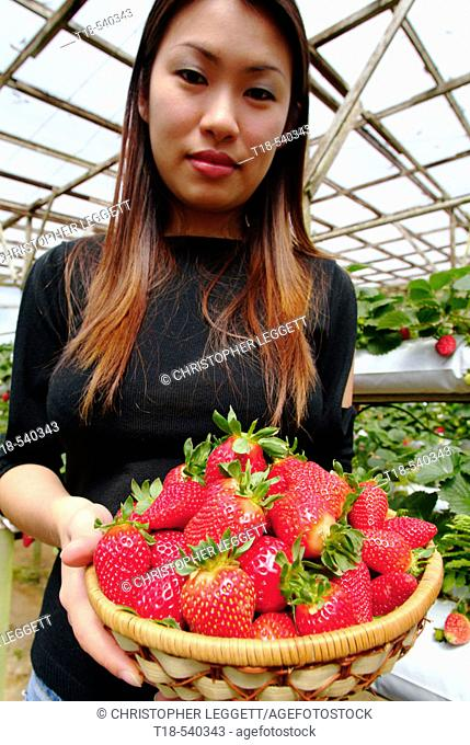 woman holding a basket of strawberies