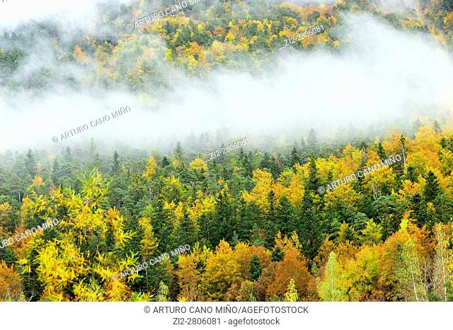 Autumn in the valley of Ordesa. Ordesa and Monte Perdido National Park. Aragonese Pyrenees, Huesca province, Spain