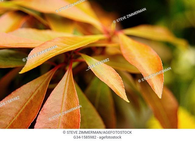 Autumn Swathe