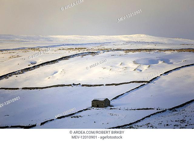 Barn in winter landscape - Swaledale, Yorkshire, UK