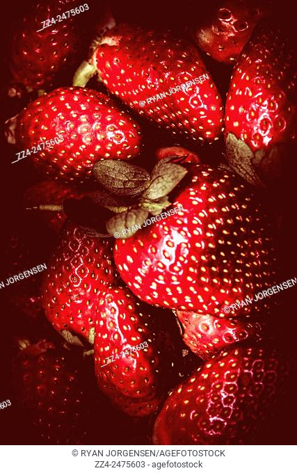 Food still-life image on a pile of red toned strawberries in contrasted light. Fresh fruit