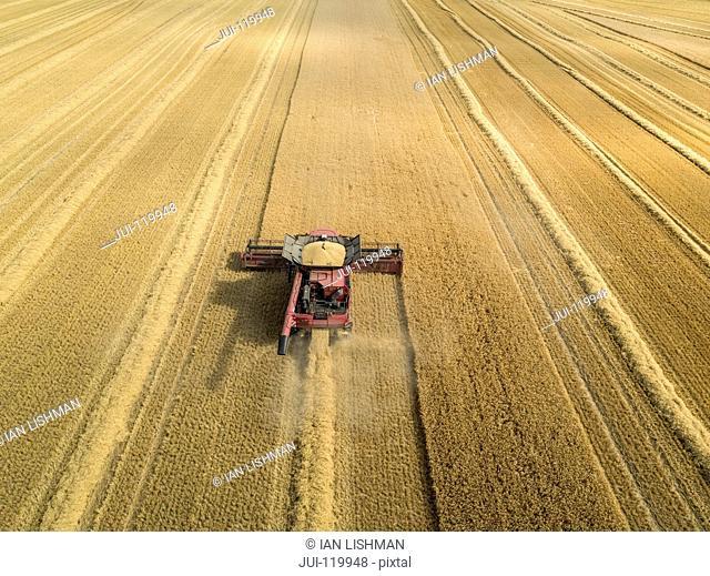 Harvest aerial overhead of combine harvester cutting summer barley field crop on farm