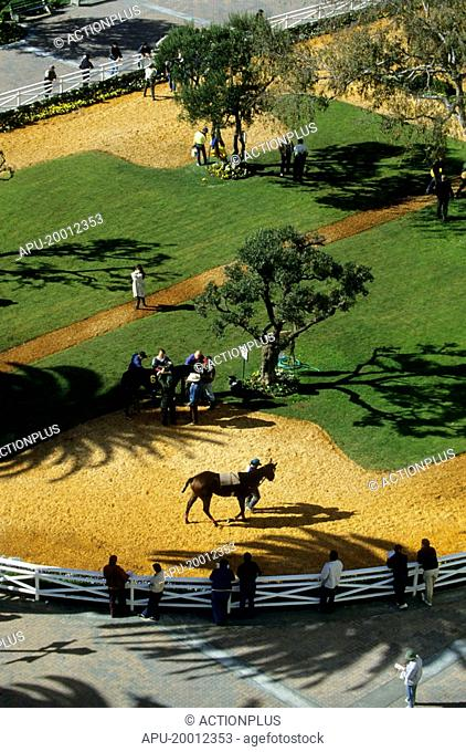 Horses in parade ring from above