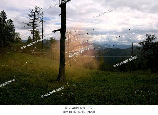 Interconnected laser beams between trees