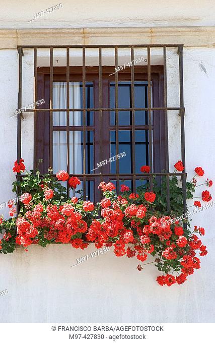 Window with geraniums (Pelargonium sp.), El Puerto de Santa María. Cádiz province, Andalusia. Spain