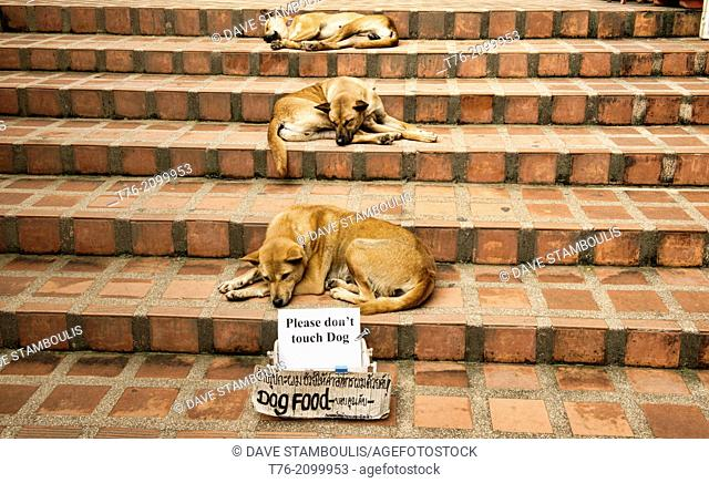 Let sleeping dogs lie, relaxing on the steps at Doi Suthep Temple, Chiang Mai, Thailand