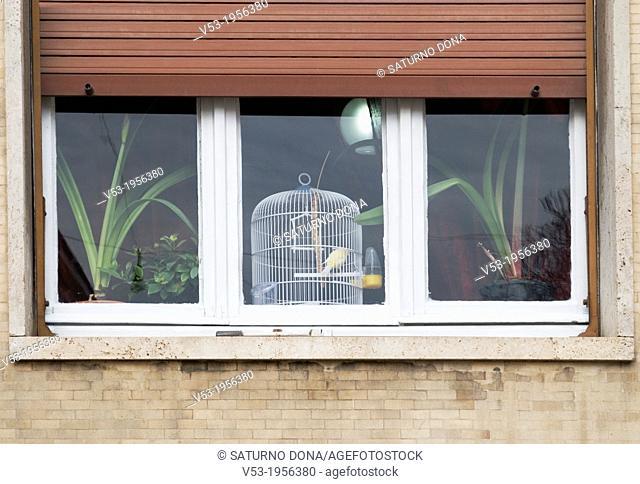 Bird cage behind window, Italy