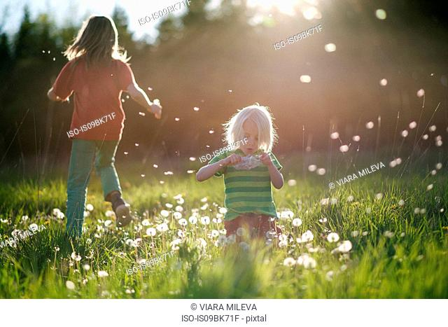 Brothers playing and blowing dandelions in green grassy field