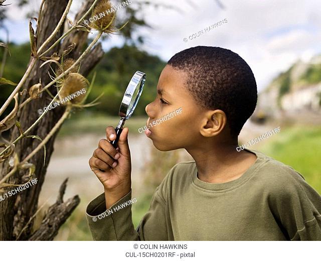 boy investigating nature